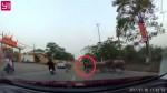 [VIDEO] Đàn trâu chạy tán loạn khi bị xe máy tông
