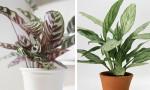 Các loại cây bạn có thể trồng trong phòng thiếu sáng