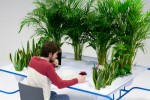 Cách bày trí cây cảnh trong nhà ngày Tết có lợi cho sức khỏe
