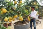 Thị trường cây cảnh Văn Giang nhộn nhịp những ngày giáp Tết