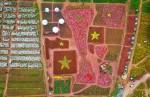 Tạo hình cúp vàng từ 30.000 cây hoa ở Hà Nội