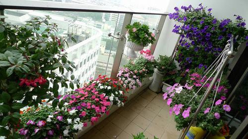 211540baoxaydung image002 Thiết kế rực rỡ sắc hoa nơi ban công nhỏ hẹp
