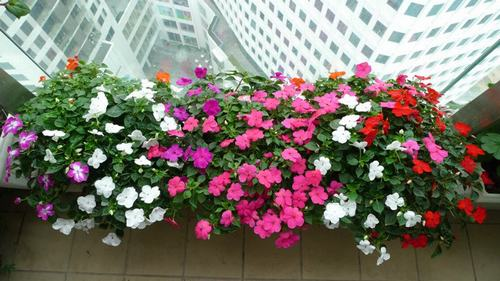 211541baoxaydung image003 Thiết kế rực rỡ sắc hoa nơi ban công nhỏ hẹp