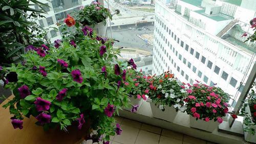 211542baoxaydung image004 Thiết kế rực rỡ sắc hoa nơi ban công nhỏ hẹp