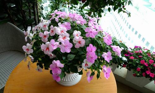 211542baoxaydung image005 Thiết kế rực rỡ sắc hoa nơi ban công nhỏ hẹp