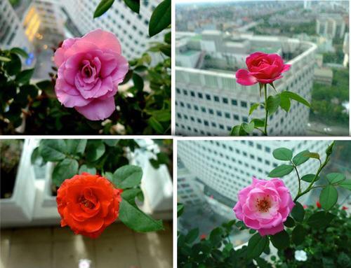 211544baoxaydung image007 Thiết kế rực rỡ sắc hoa nơi ban công nhỏ hẹp