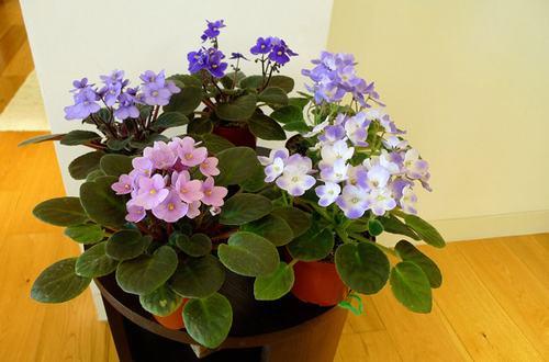 211544baoxaydung image008 Thiết kế rực rỡ sắc hoa nơi ban công nhỏ hẹp