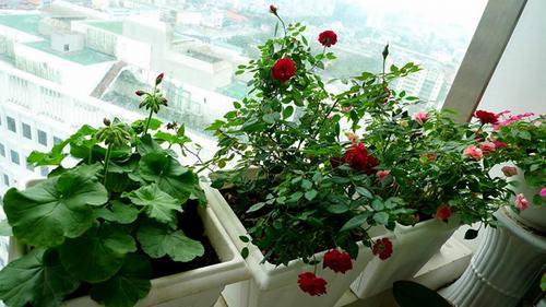 211545baoxaydung image009 Thiết kế rực rỡ sắc hoa nơi ban công nhỏ hẹp