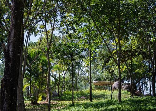 151801baoxaydung 2 Chiêm ngướng kiến trúc mái đá giữa công viên Việt làm sốc báo Tây