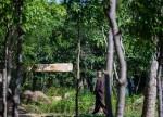 Kiến trúc mái đá giữa công viên Việt làm sốc báo Tây
