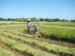 Điều kiện tặng cho đất nông nghiệp