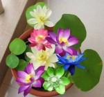 Ngày xuân nói chuyện hoa cảnh trong phong thủy