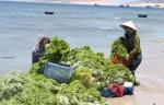 Quy hoạch không gian biển hướng tới kinh tế xanh bền vững