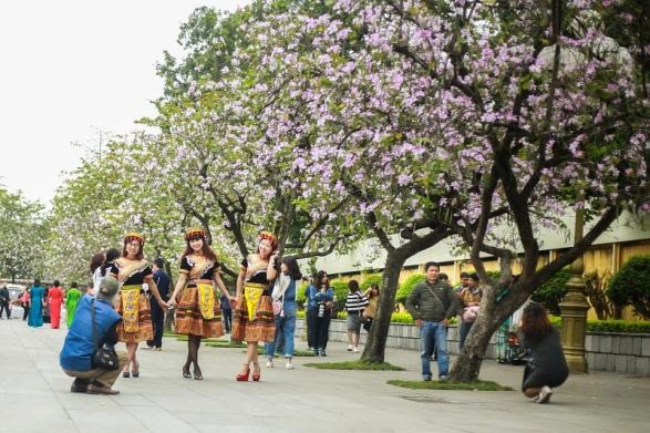 Hoa ban, hoa sưa nở rộ khắp phố phường Hà Nội
