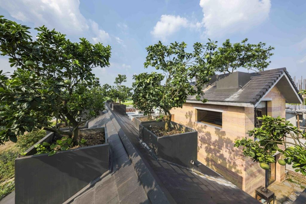 Biệt thự ở Hà Nội gây ngỡ ngàng khi trồng cả vườn cây ăn quả trên mái nhà