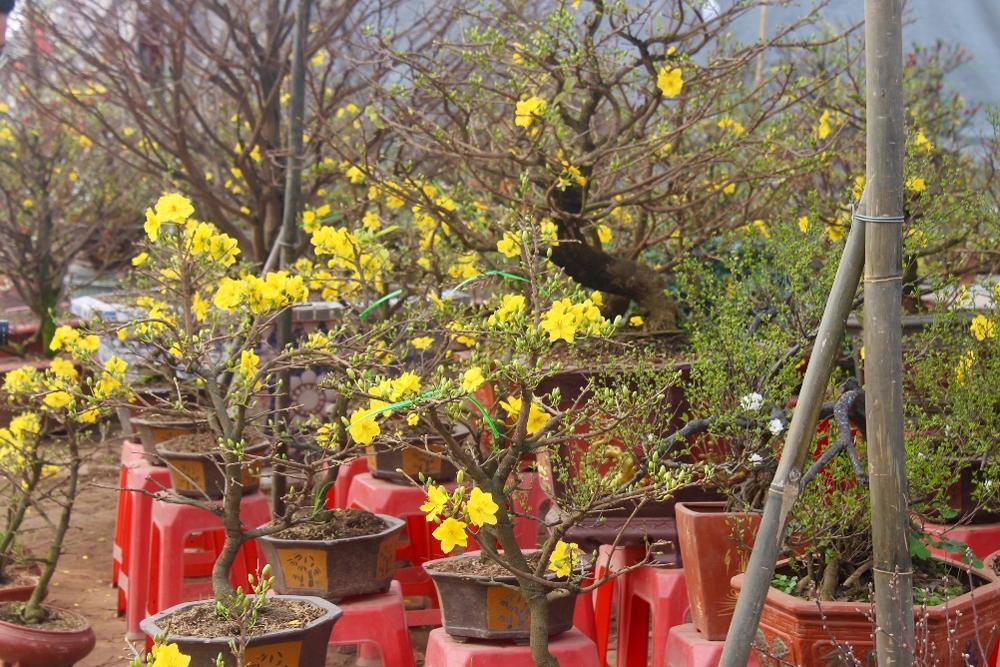Hà Nội: Sắc Xuân rực rỡ trên phố