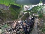Yên Thành, Nghệ An: Ngang nhiên chiếm đường trồng cây, xây nhà