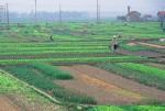 Điều kiện DN được nhận chuyển nhượng đất nông nghiệp