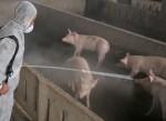 Uống nhầm lọ sát khuẩn chuồng lợn trong cơn say rượu