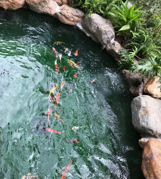 3726 image012 - Chiêm ngưỡng biệt thự vườn đẹp như mơ của cặp vợ chồng trẻ Hà Nội