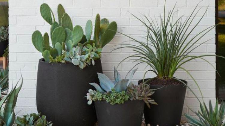 5 ý tưởng với cây xanh giúp nhà bạn thêm thoáng đãng, xanh mát
