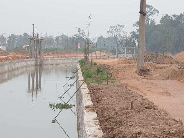 Vĩnh Phúc: Cần xử lý nghiêm kẻ triệt hạ cây xanh tại Cụm công nghiệp làng nghề Minh Phương