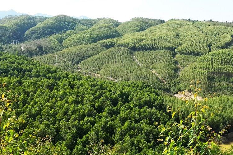 Điều kiện chuyển nhượng đất rừng sản xuất