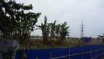 Vụ côn đồ chiếm đất tại Hải Phòng: Quận Hải An khẳng định đất bị chiếm là đất công