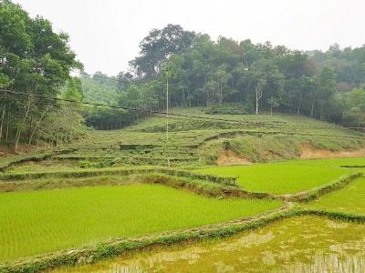 Hạ Hòa (Phú Thọ): Lộ rõ thông tin thiếu cơ sở pháp lý trong xét xử tranh chấp đất đai tại tòa sơ thẩm