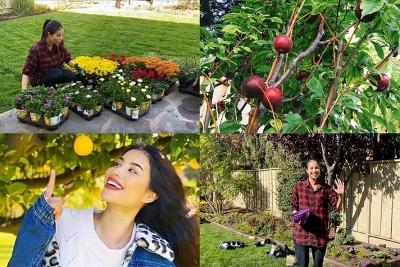 Khám phá khu vườn hàng chục loại trái cây của hoa hậu Phạm Hương ở Mỹ