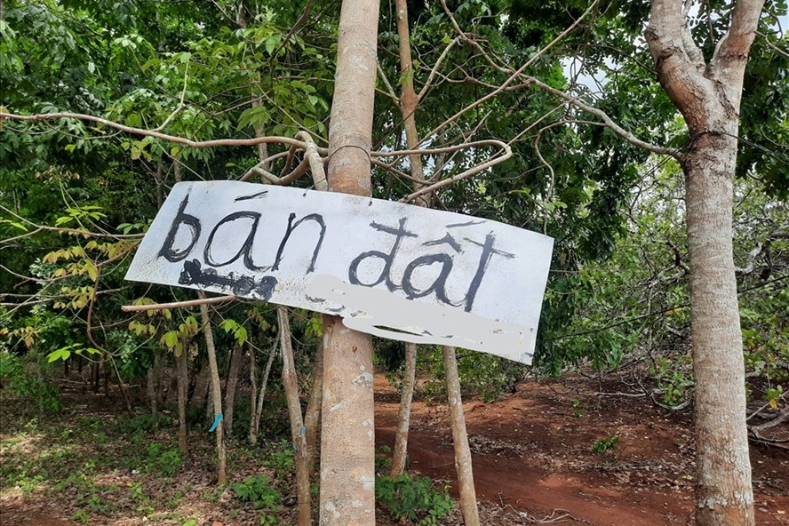 Bình Dương, Bình Phước: Cảnh báo sốt đất và ra biện pháp ngăn chặn