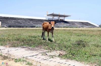 Sân vận động 21 tỷ để hoang cho bò gặm cỏ