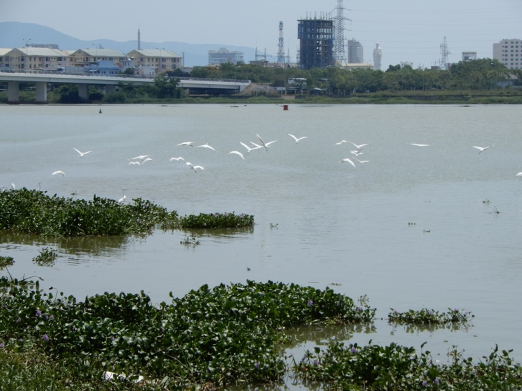 Đà Nẵng: Báo động đỏ về đất cây cối 224548baoxaydung_image001