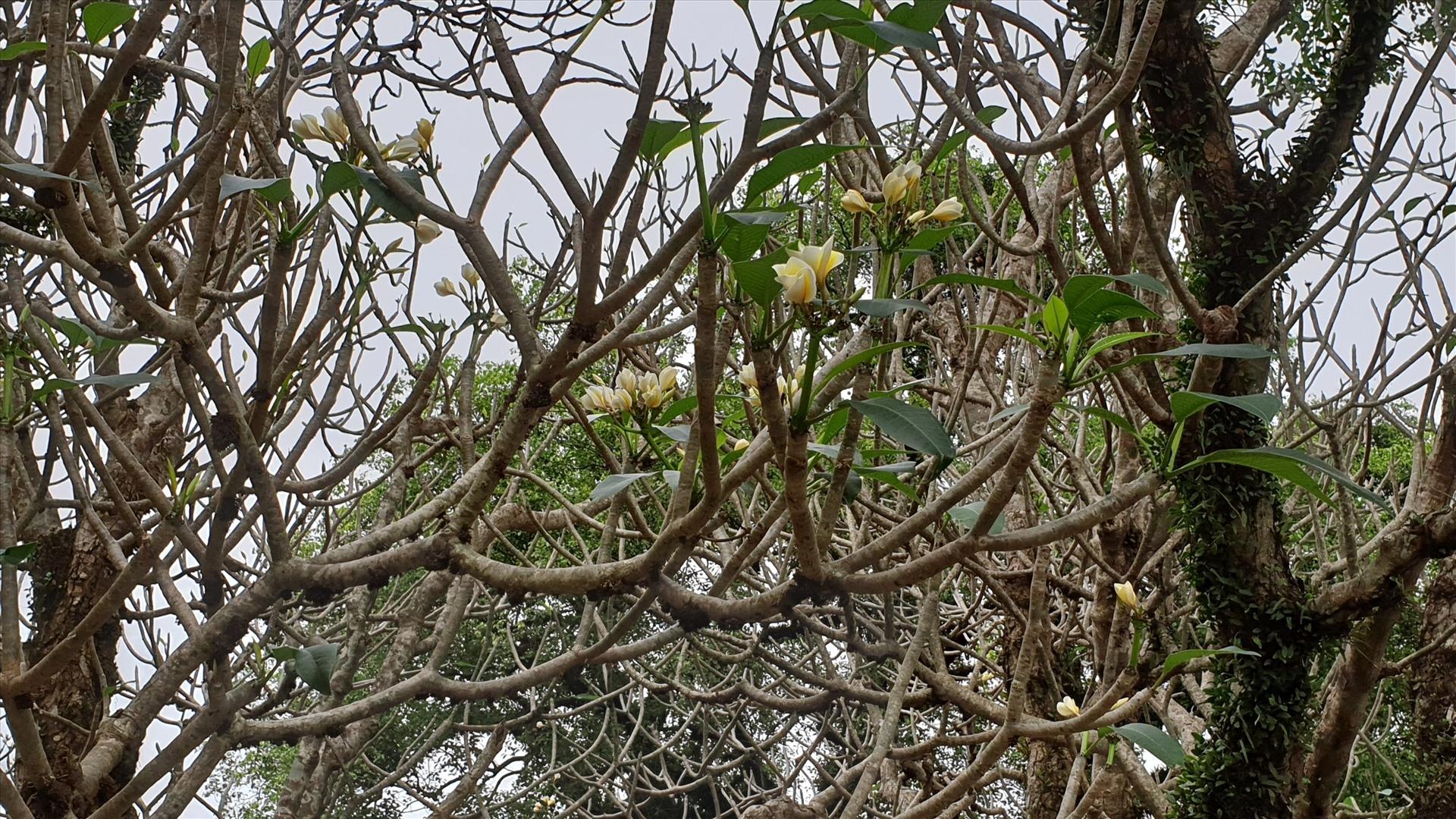 chiem nguong biet thu phap co tran ngap hoa dai xung quanh