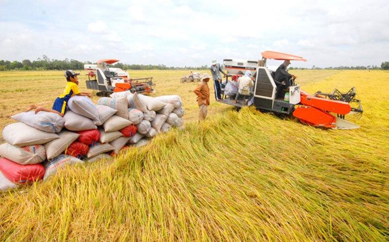 Xuất khẩu gạo và an ninh lương thực