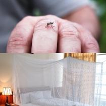 Những cách khiến căn nhà bạn thành bất khả xâm phạm với muỗi sốt xuất huyết