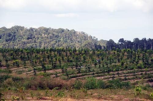 Chuyển mục đích sử dụng đất cần phải bảo đảm phù hợp quy hoạch, kế hoạch hàng năm