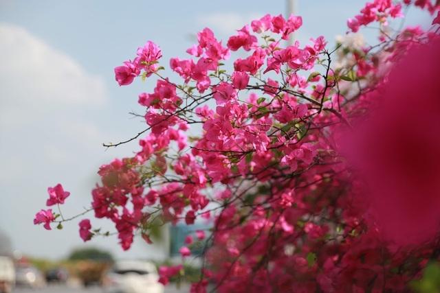phat sot voi con duong hoa giay dep quen loi ve ngay gan ha noi