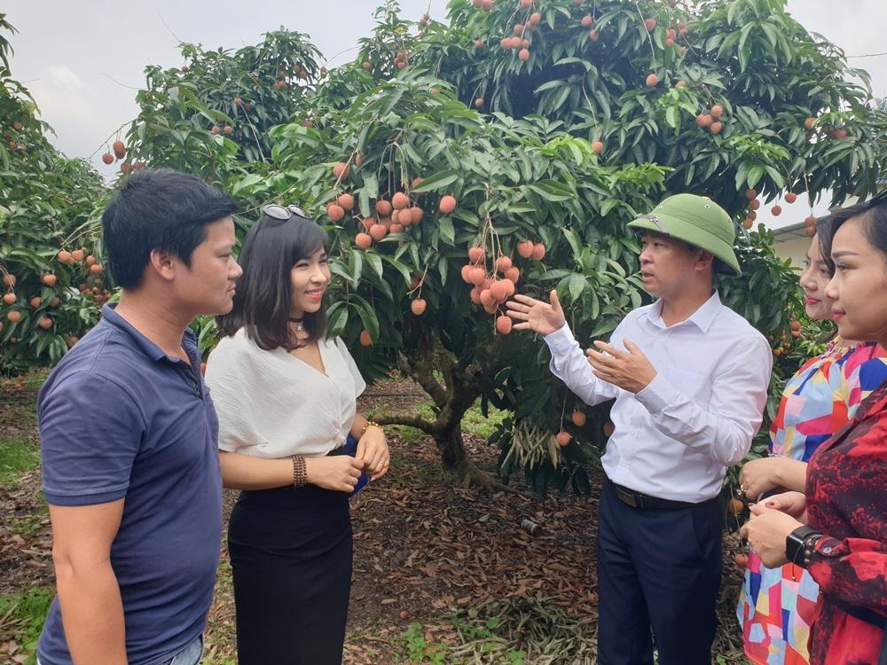 Tiêu thụ vải thiều Bắc Giang năm 2020: Nhiều tín hiệu lạc quan