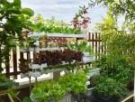 'Miệt vườn' trên sân thượng của nữ giám đốc Sài Gòn
