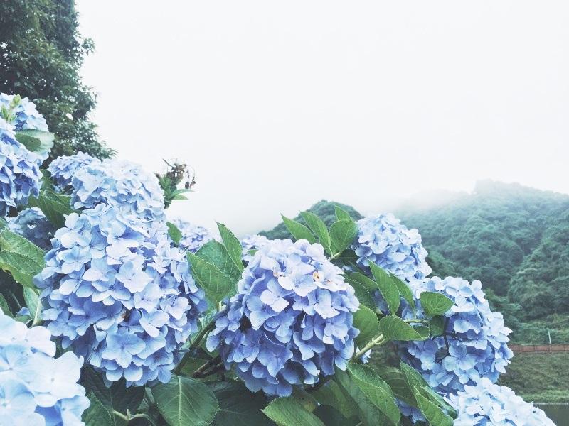 anh minh hoa