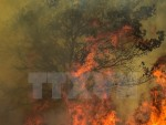 Tranh cãi về nguyên nhân vụ cháy rừng kinh hoàng tại Bồ Đào Nha
