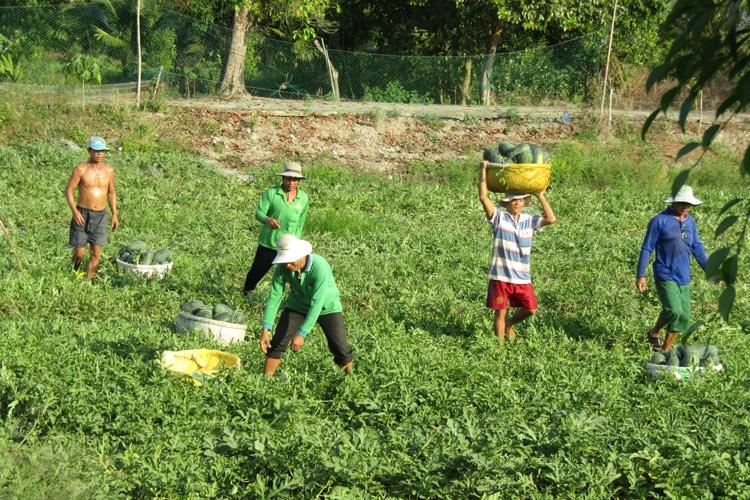 Hải Quan phản hồi về thuế nhập khẩu mặt hàng hạt giống rau và dưa hấu các loại