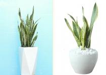 Tác dụng tuyệt vời của 5 loại cây nên đặt trong phòng tắm nhà bạn
