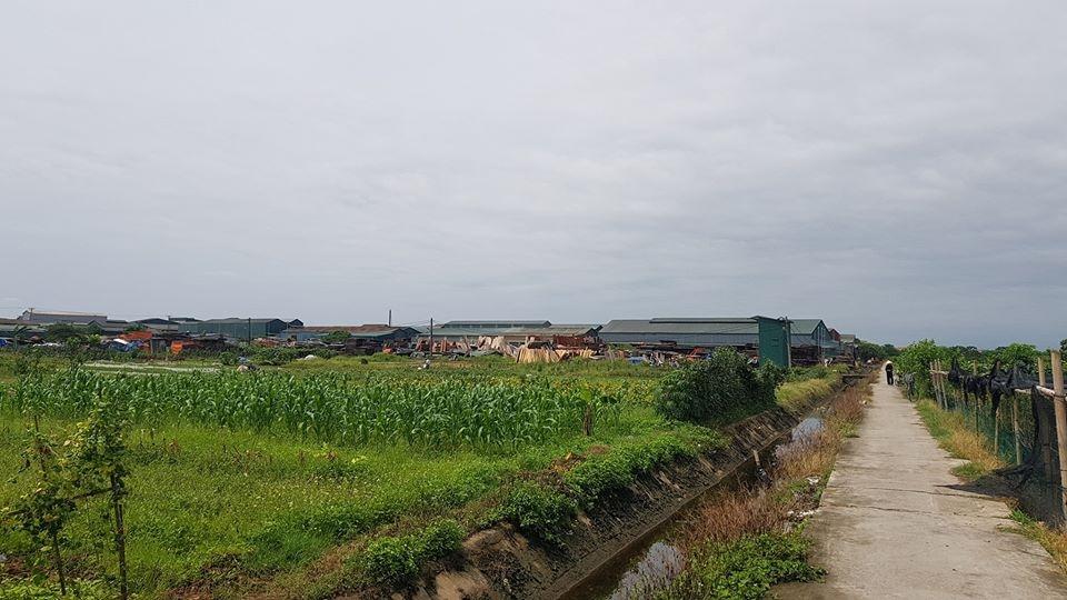 """Đan Phượng (Hà Nội): Hàng loạt xưởng gỗ đua nhau """"mọc"""" trên đất nông nghiệp"""