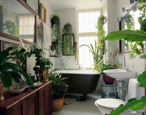 Phòng tắm thư giãn nhờ sử dụng cây cảnh