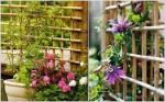 Cách làm giàn hoa leo đơn giản mà đẹp