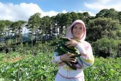 Lý Nhã Kỳ mua 50 hecta đất đồi ở Đà Lạt để trồng rau, nuôi gà