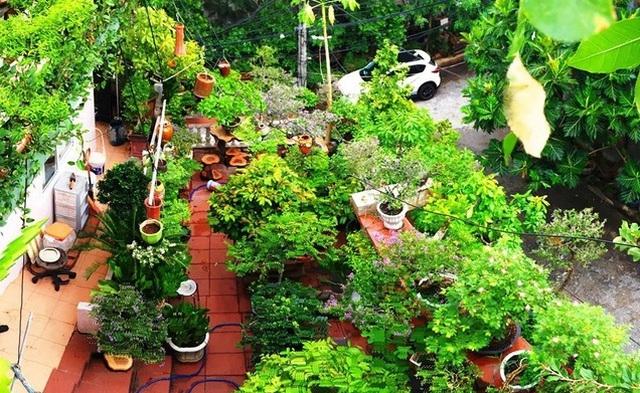 """Ấn tượng vườn bonsai ngược trên sân thượng nhà phố của """"dị nhân"""" Quảng Nam - Ảnh 11."""