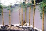 Trồng cây đúng hướng sẽ mang lại tài lộc